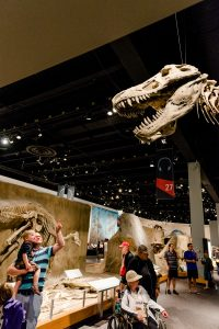 Father and son looking at Tyrannosaurus Rex
