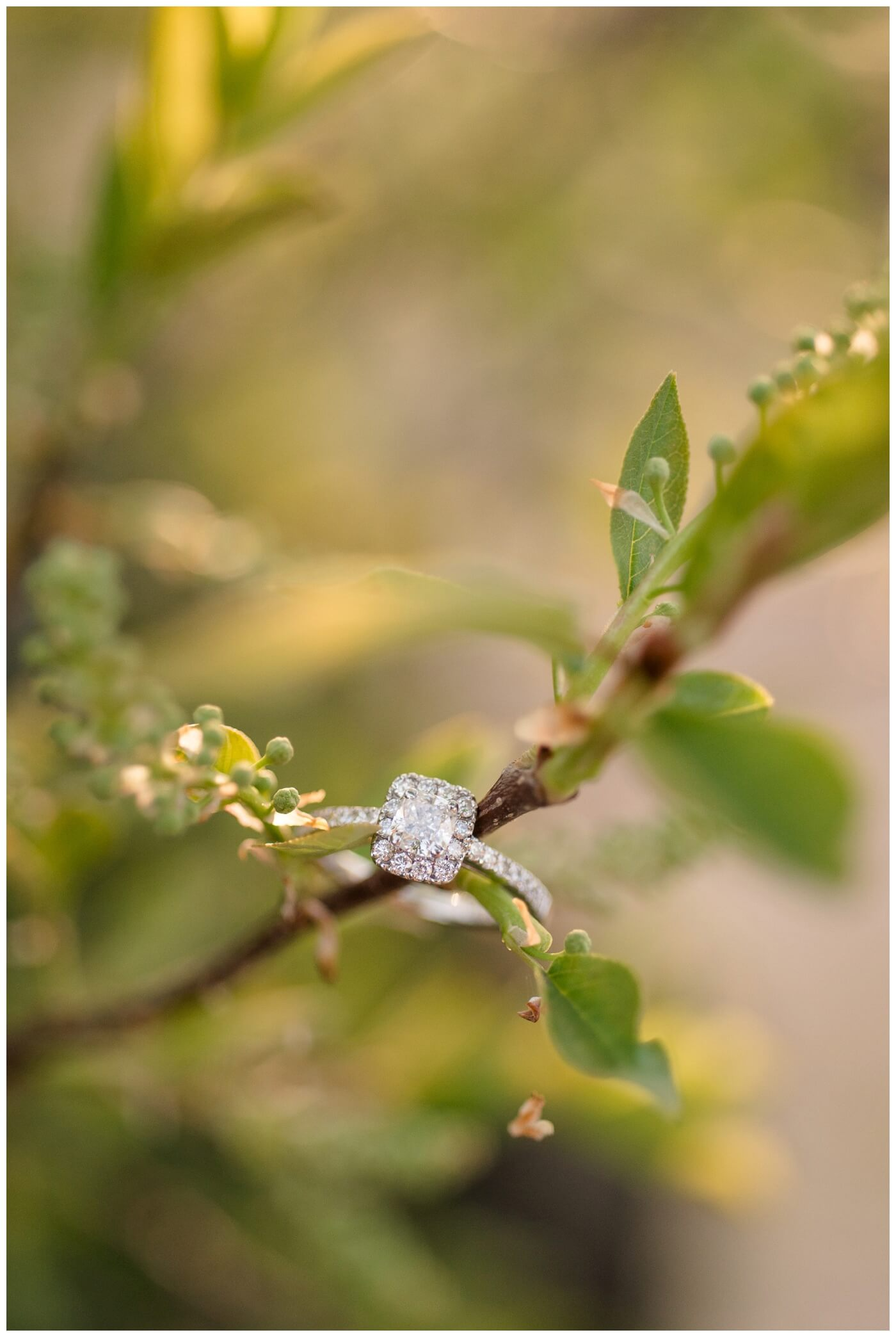 Regina Engagement Photographer - Multi Diamond ring